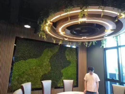 苏州绿植墙图片大全,绿植墙