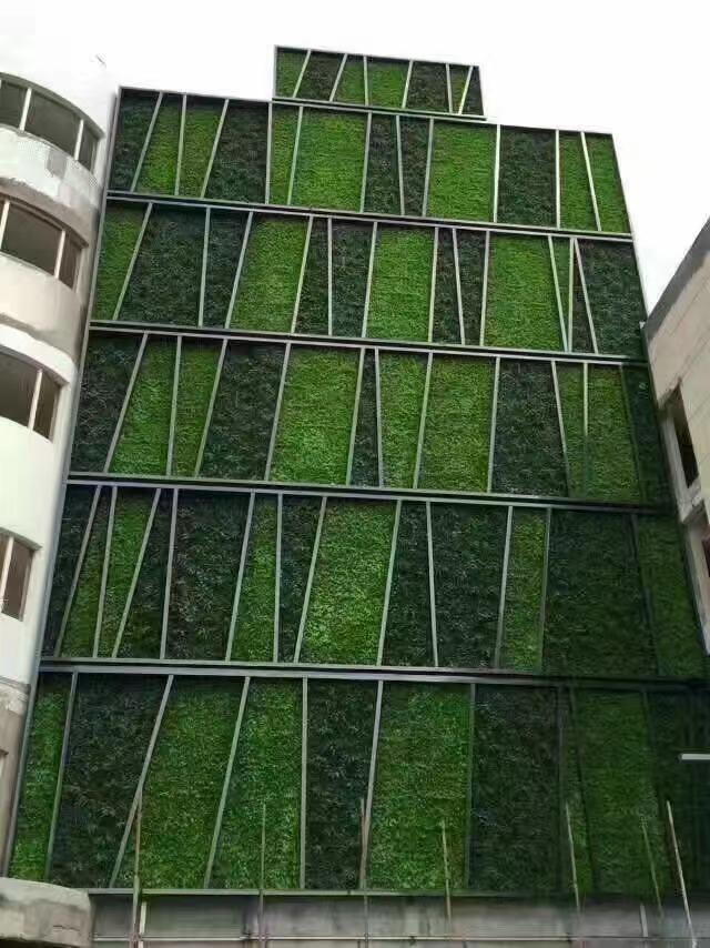 专业绿植墙便宜,绿植墙