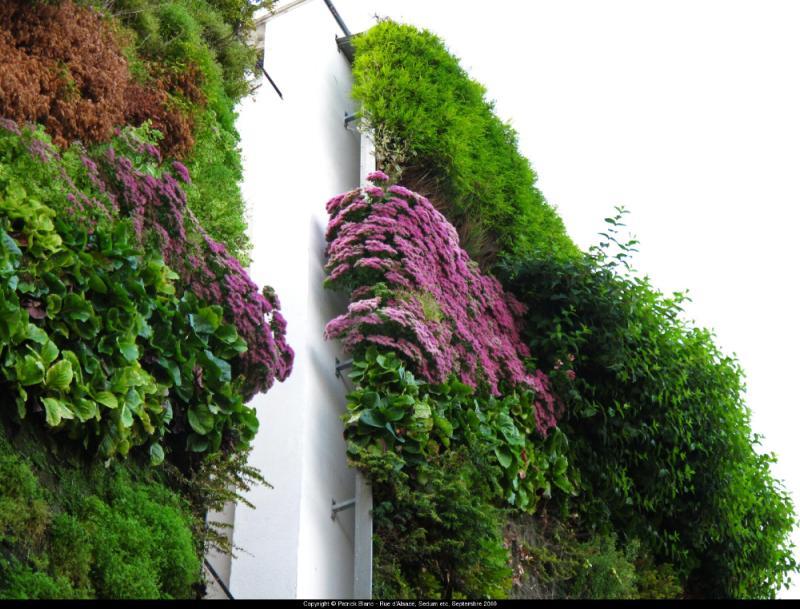 美式绿植墙独特景观制作,绿植墙