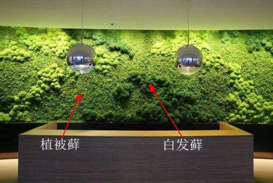福建绿植墙景观定制,绿植墙
