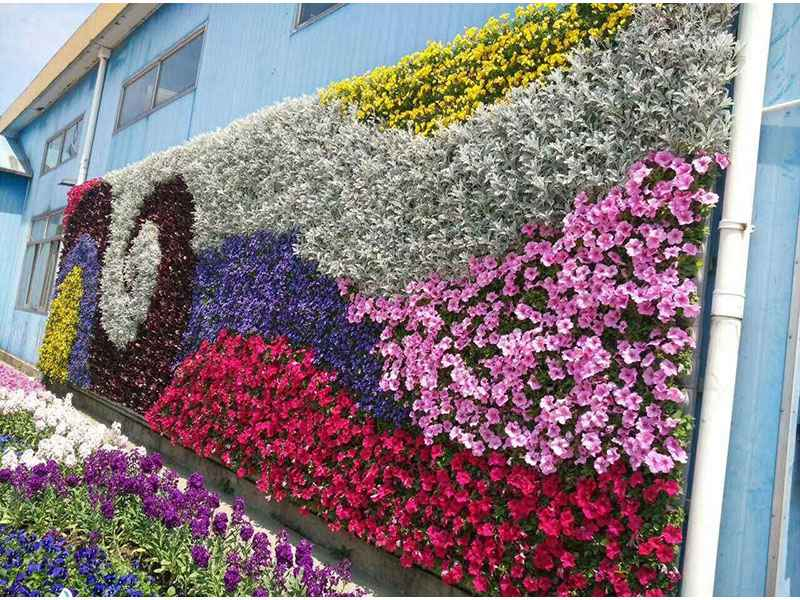 扬州绿植墙,绿植墙