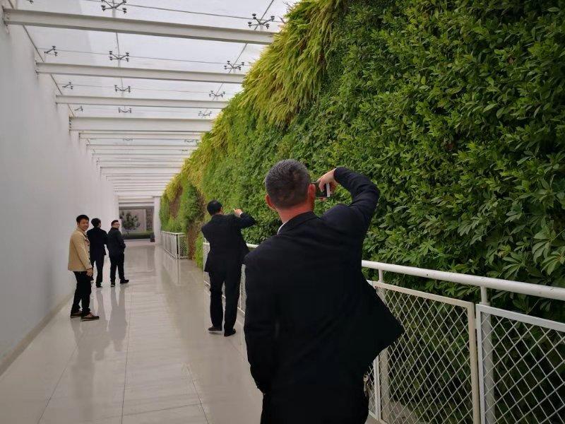 山东绿植墙,绿植墙