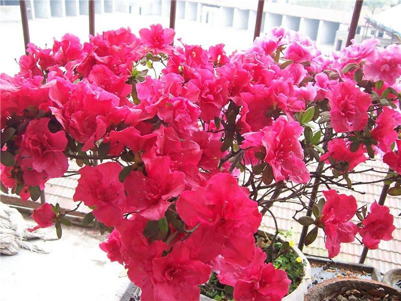 桐庐花卉便宜,花卉