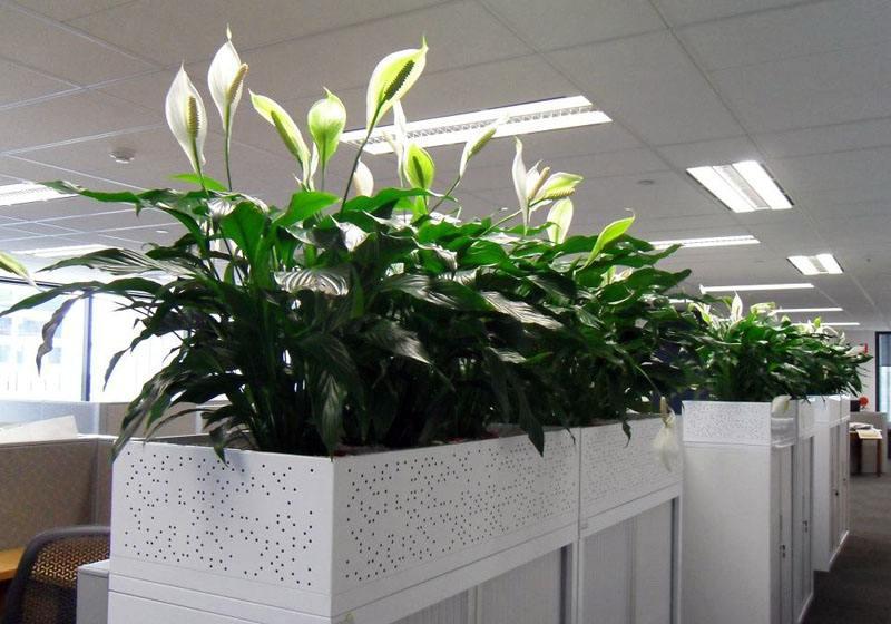 大关植物出租排行,植物出租