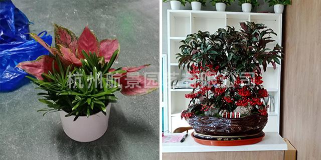 滨江区盆景花卉便宜 欢迎咨询「杭州航景园艺供应」