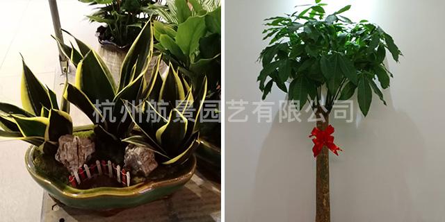 下城区专业室内花卉设计 值得信赖「杭州航景园艺供应」