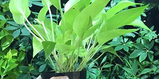 江苏食用菌种植基质批发价 值得信赖「杭州云乘园艺科技供应」