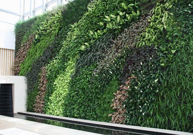 福建植物墙立体绿化墙厂家 来电咨询「杭州云乘园艺科技供应」