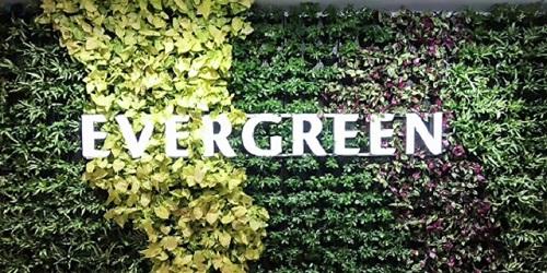 浙江景观立体绿化是什么,立体绿化