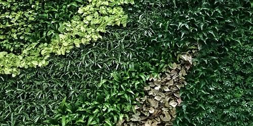 重庆庭园立体绿化墙厂家,立体绿化