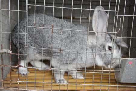 蒲江新西兰兔养殖技术 推荐咨询「济宁红阳养殖供应」