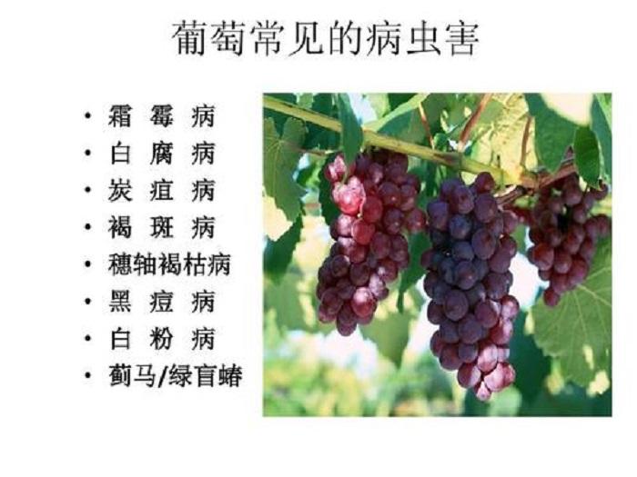 洛陽植物病害「西安聯華黑牛農化供應」