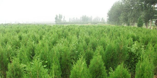 屋顶园林绿化建议,园林绿化