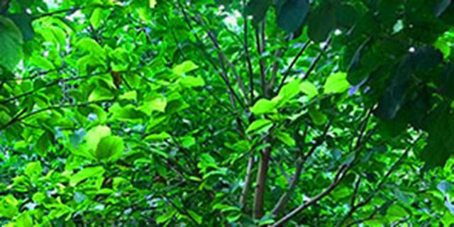 乡村园林绿化养护,园林绿化