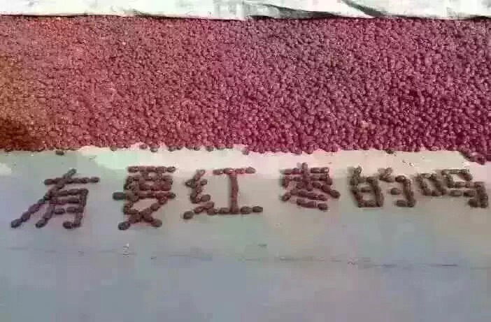 哈尔滨哪里有卖大枣 欢迎咨询「郑州牛牛枣业供应」