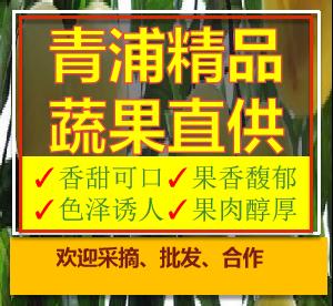 發源地錦繡黃桃果園 有口皆碑「上海青來果林供應」