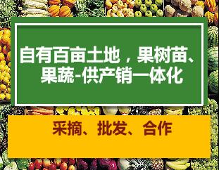 陕西红富士锦绣黄桃 铸造辉煌「上海青来果林供应」