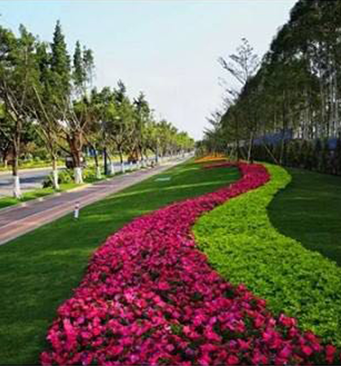 宜宾小区园林绿化施工,园林绿化