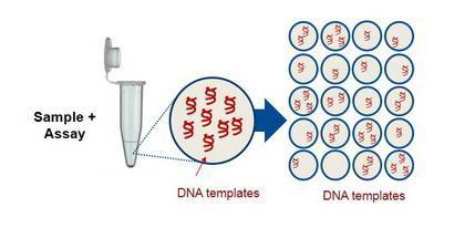 上海低靶点拷贝数字PCR 来电咨询 上海朝瑞生物科技供应