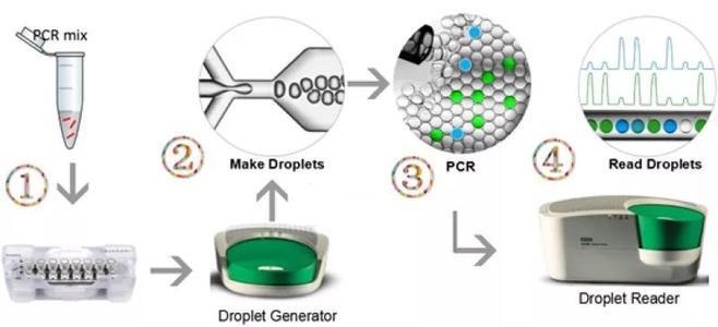 上海高靈敏數字PCR檢測 歡迎咨詢 上海朝瑞生物科技供應