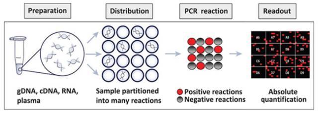 合肥数字PCR检测服务 欢迎来电 上海朝瑞生物科技供应