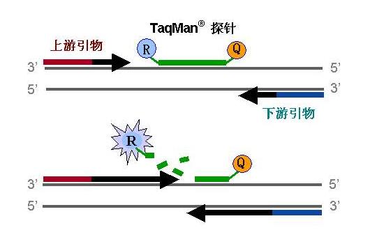 天津水体基因组荧光定量PCR分析服务 欢迎咨询 上海朝瑞生物科技供应