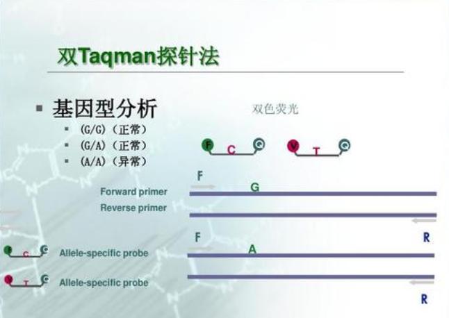 上海转基因荧光定量PCR分析服务 欢迎来电 上海朝瑞生物科技供应
