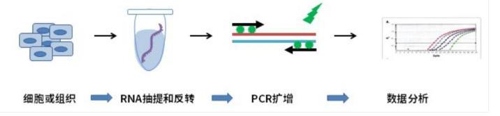 北京肿瘤基因荧光定量PCR实验技术服务 欢迎来电 上海朝瑞生物科技供应