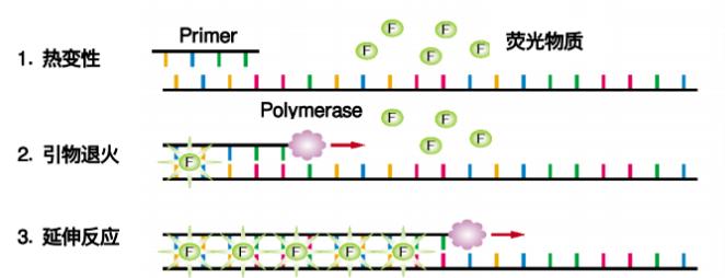 北京基因突变荧光定量PCR分析服务