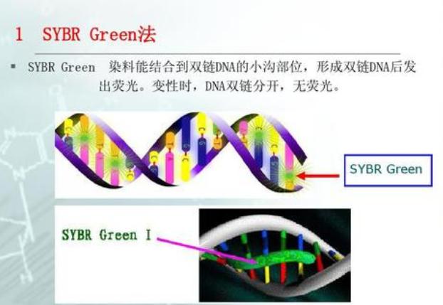 福建MiRNA 荧光定量PCR实验技术服务 欢迎来电 上海朝瑞生物科技供应