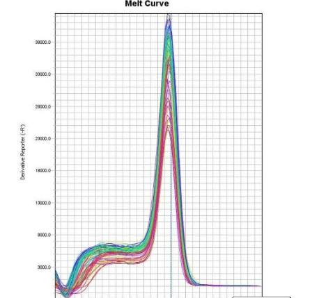 天津食品安全荧光定量PCR实验技术服务 来电咨询 上海朝瑞生物科技供应