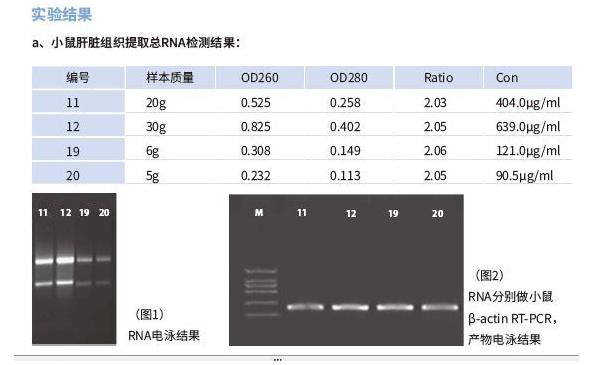 北京四步9分钟完成RNA提取试剂盒50T/690元 欢迎咨询 上海朝瑞生物科技供应