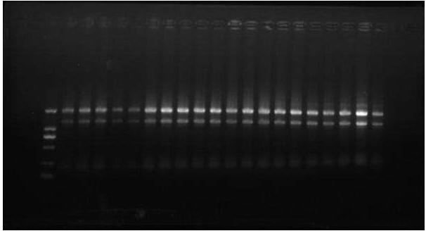 上海高纯度RNA提取试剂盒QQ 804036498 欢迎来电 上海朝瑞生物科技供应