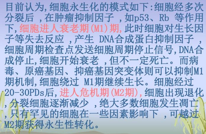 上海抑癌基因细胞永生化 欢迎来电 上海朝瑞生物科技供应