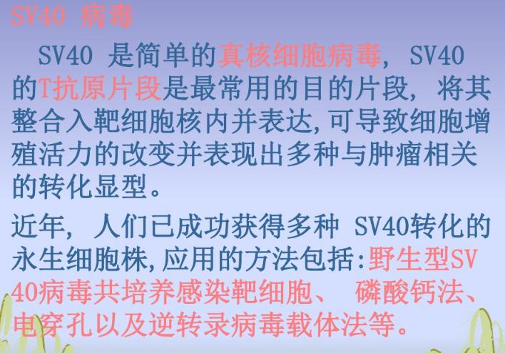 江苏HPV法细胞永生化实验承包 欢迎咨询 上海朝瑞生物科技供应