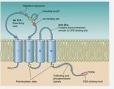 江苏人源Claudin18.2蛋白全国发货 欢迎咨询 上海朝瑞生物科技供应
