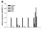 天津重组人源Claudin18.2蛋白规格齐全 欢迎咨询 上海朝瑞生物科技供应