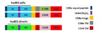 天津 重組人源Claudin18.2蛋白質量放心可靠 歡迎咨詢 上海朝瑞生物科技供應