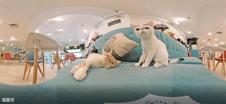 官方VR拍摄省钱 和谐共赢「上海格厚视觉设计供应」