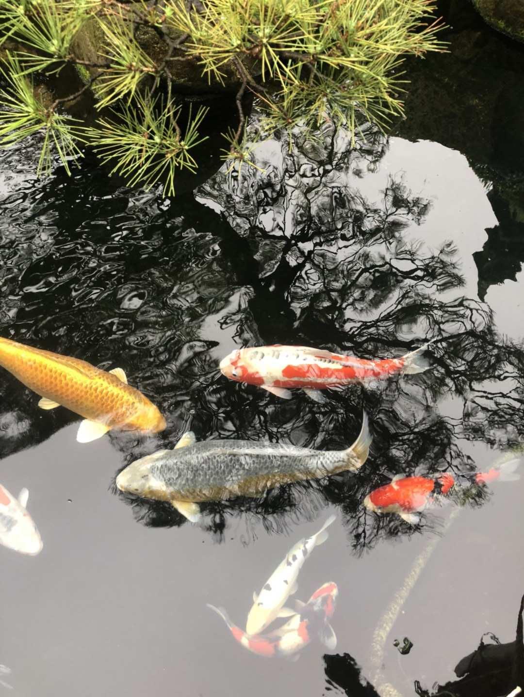 专业定制大型鱼缸推荐厂家「上海靓鳞智能科技供应」