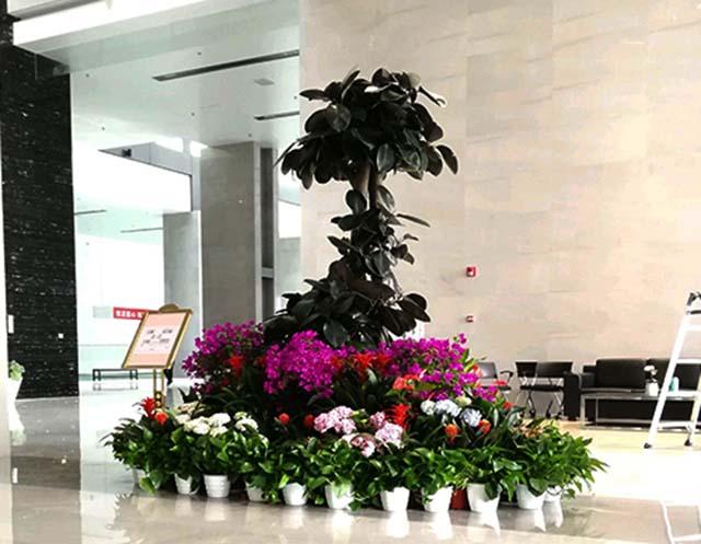 室内花卉绿植租赁服务公司,绿植租赁