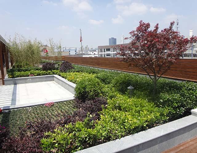 松江区办公室绿植租赁园林绿化,绿植租赁