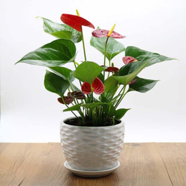 长宁区校园植物租赁公司哪家便宜,植物租赁