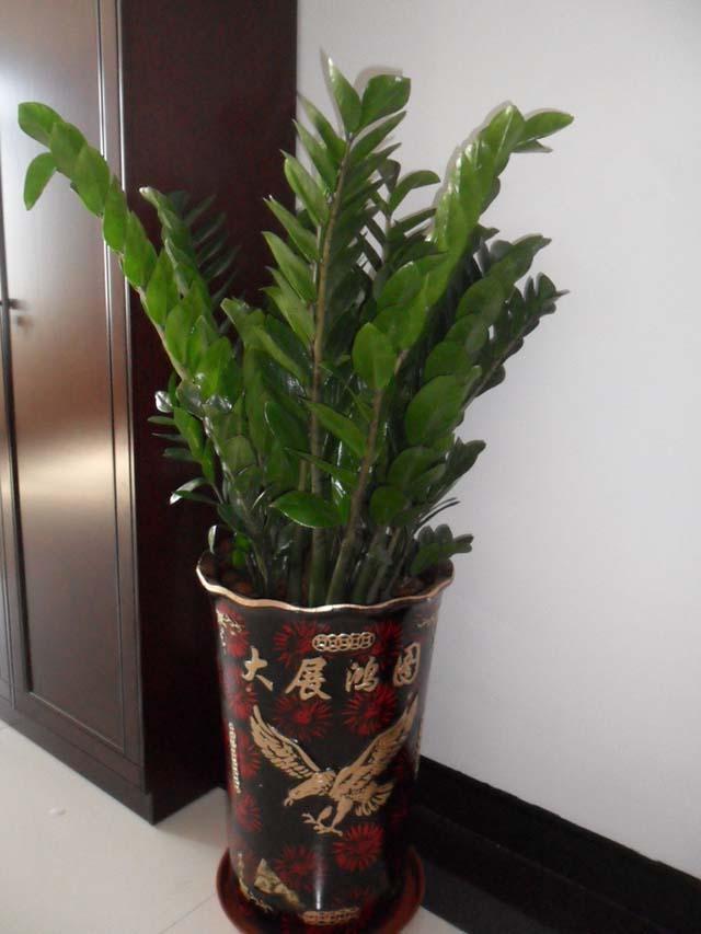 徐汇区写字搂花卉出租有哪些公司,花卉出租