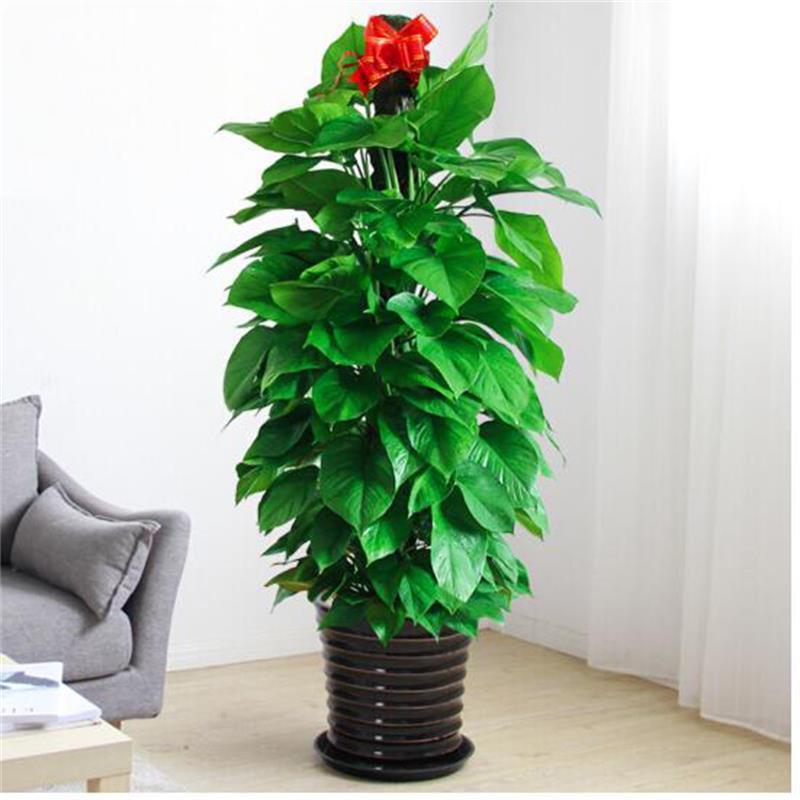 昆山写字楼办公室植物租赁 真诚推荐「上海瑞合绿化工程供应」