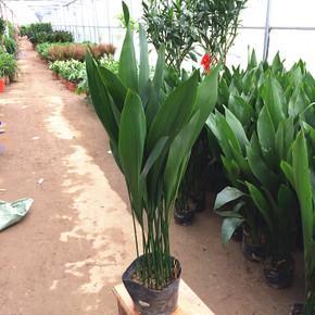 长宁区金桥植物租赁,植物租赁