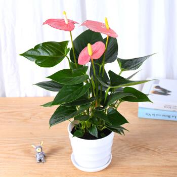 植物租赁找哪家,植物租赁