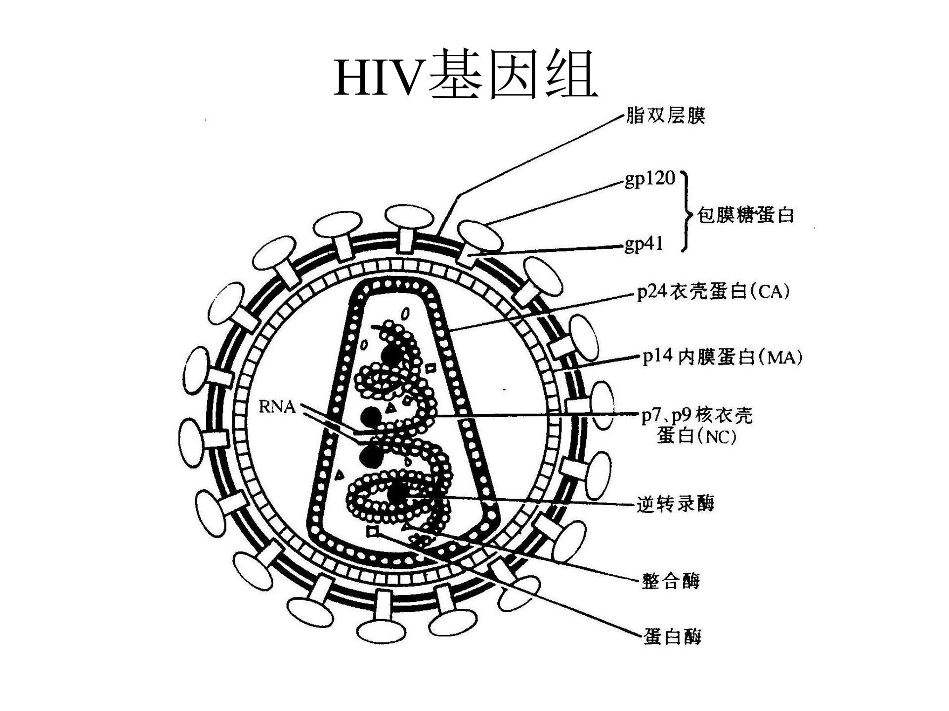 四川专门病毒全基因组测序「上海探普生物科技供应」