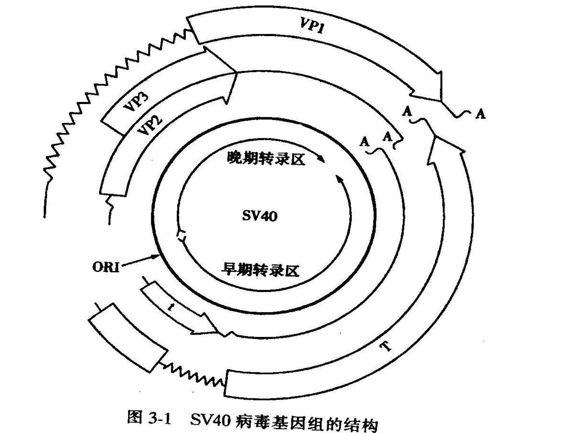 上海动物***全基因组测序服务介绍,***全基因组测序
