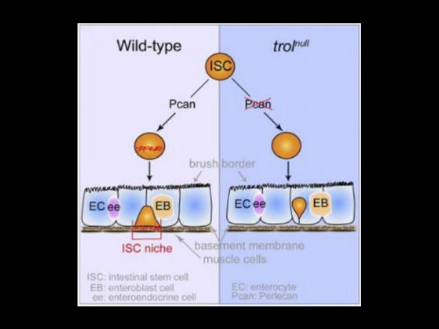 貴陽細胞外基質膠推薦廠家 蘇州君欣生物科技供應